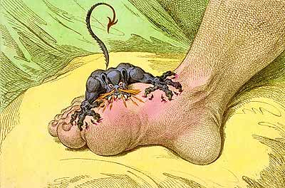 gillray-thegout